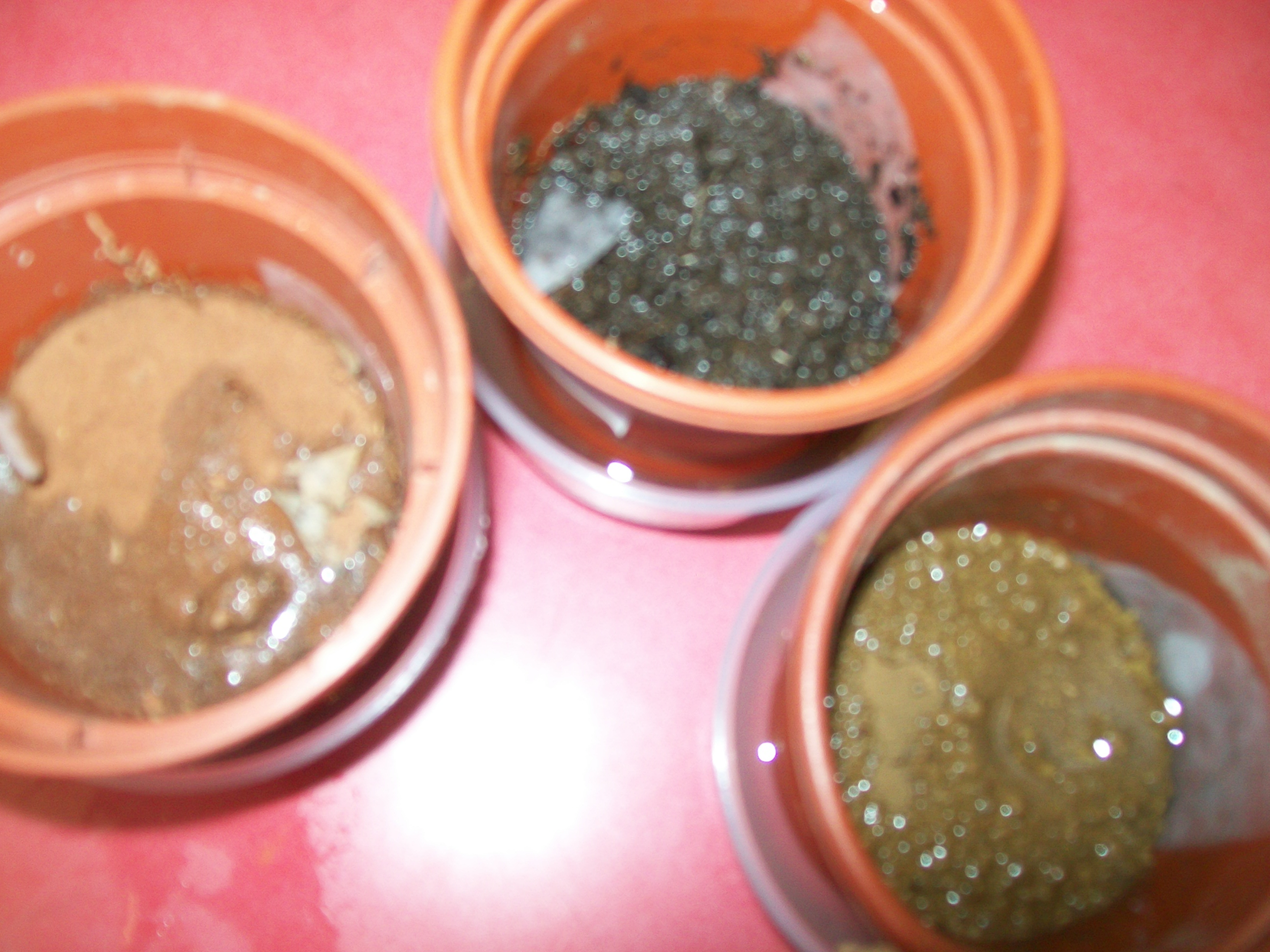 Science experiment by year5 permeability of different for Science dirt