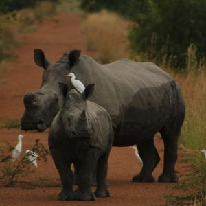 Poaching strikes at the heart of a private game reserve in South Africa