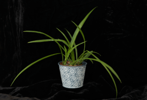 photo of a plant on black background