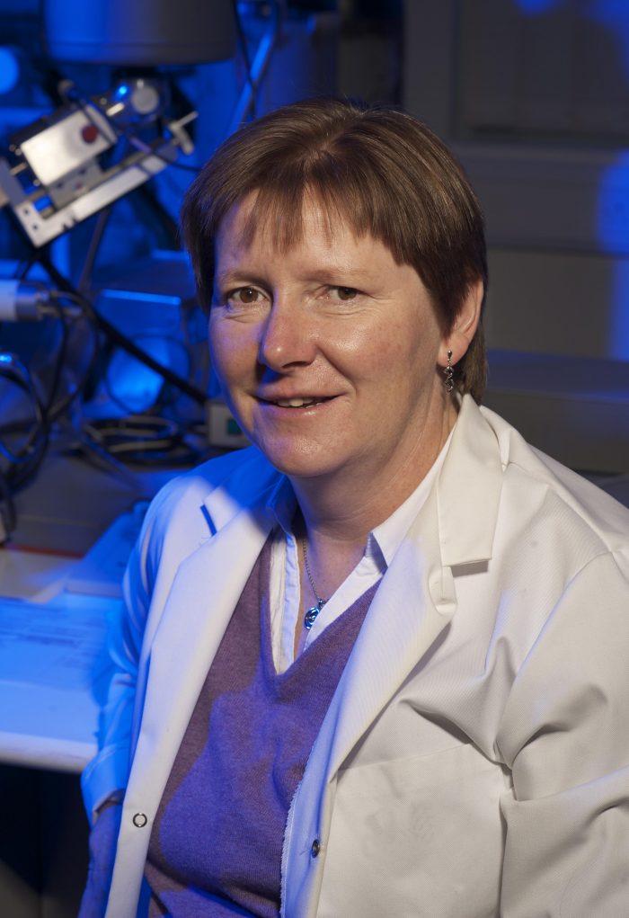 Professor Alison Bruce
