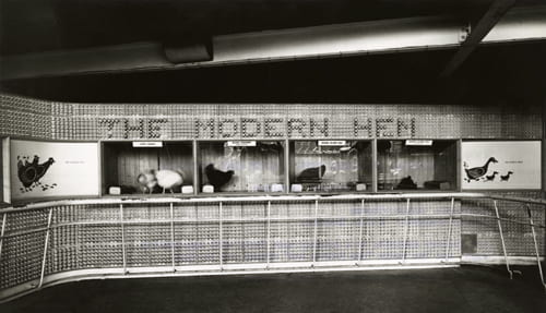Black and white photographic print showing the lettering at The Modern Hen section of the poultry exhibits in the Country Pavilion at the Festival of Britain, 1951. Designed by FHK Henrion. From the Design Council Archive housed at the University of Brighton Design Archives.