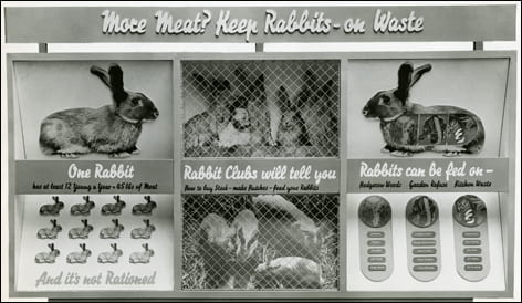 Black and white photograph of a war-time information panel, designed by FHK Henrion, promoting home-rearing of rabbits to supplement rationed meat. Taken from the FHK Henrion Archive housed at the University of Brighton Design Archives.