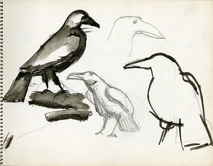 Four different ink sketches of a crow on white paper, drawn by Paul Clark in 1960. Taken from a Paul Clark sketch book from the Paul Clark Archive, housed at the University of Brighton Design Archives.
