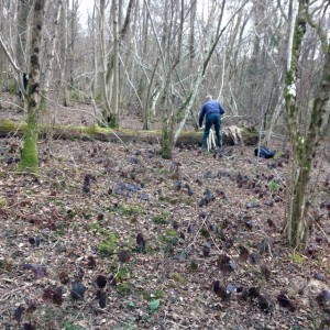 working within calling distance, cutting and preparing round wood pieces for pathways. The woodland is still quietly waiting for leaves to open