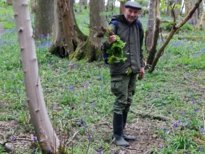 Tim waves around a bunch of sycamore seedlings - or should I say trophies!