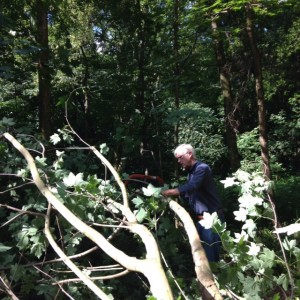 the fallen tree is reduced to pieces suitable for corduroy, by Mike