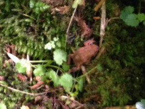 a small red toad spotted by the North entrance stile