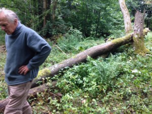 decisions are being made about converting this fallen ash into usable timber