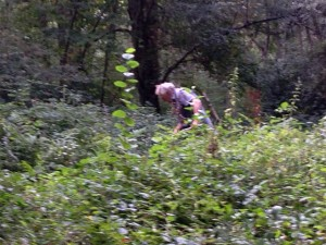 John is scything down the brambles in the glade around the Trafalgar oak tree