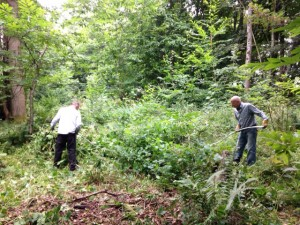 Ken and David battle through the brambles in Private glade
