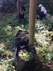 Brash and small branches are bagged up ready for burning