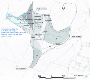 a map of the woods with the control area marked