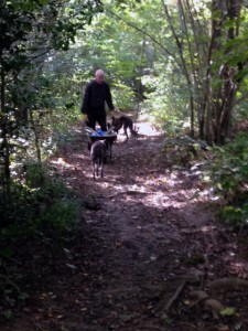 Ken and his two dogs return after planting his new woodlanders information posts