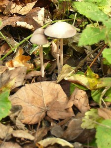 funghi-3