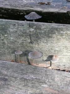 funghi-7