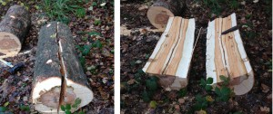 the timber is ready to be made into a seating bench - perhaps in a few weeks time.