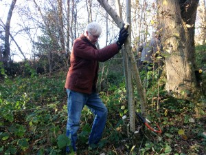 Mike makes small work of this coppicing lark!