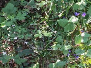 https://blogs.brighton.ac.uk/woodlanders/files/2019/04/wood-anemones-and-bluebells.jpg