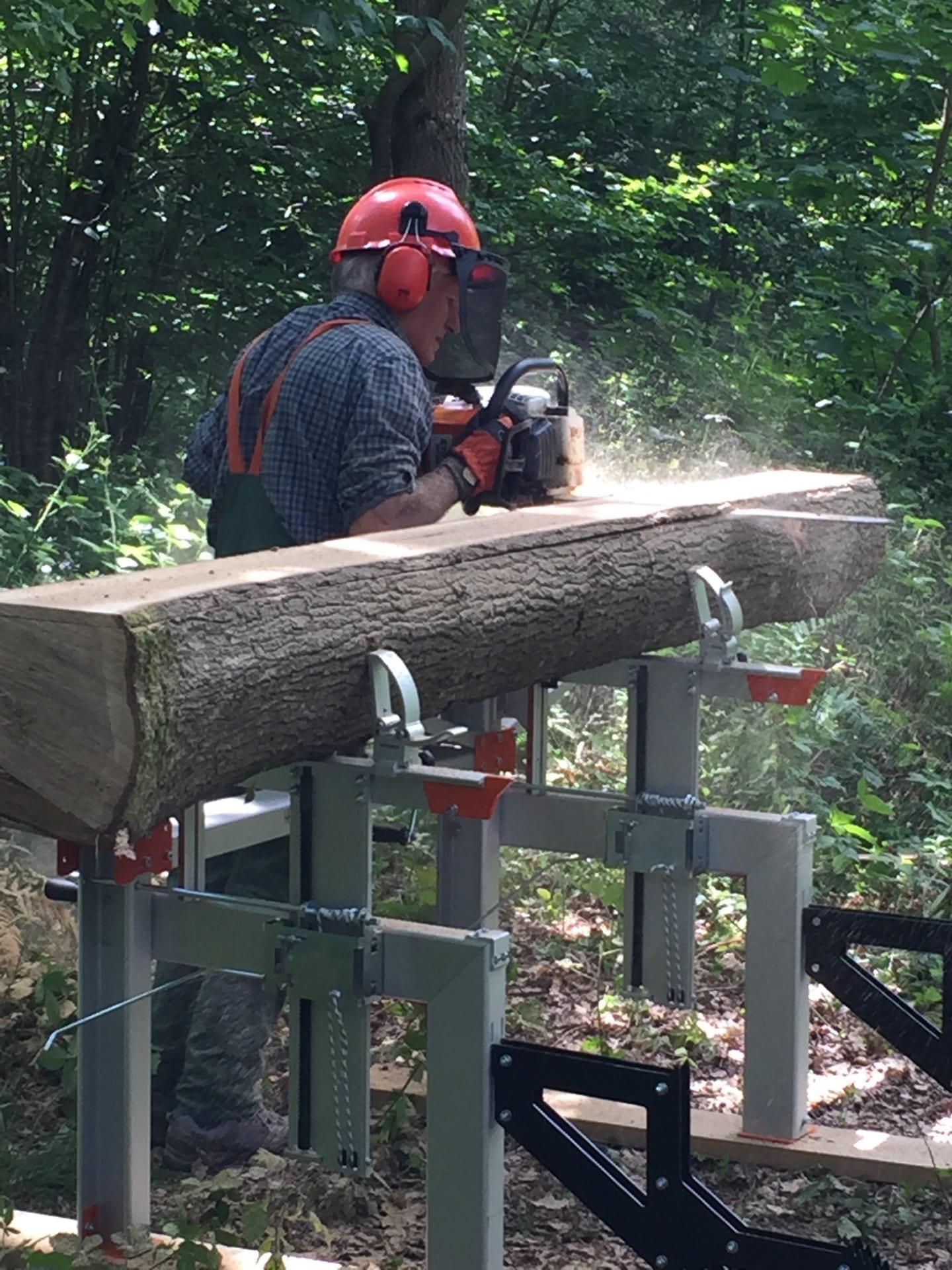 cutting through oak tree with chainsaw