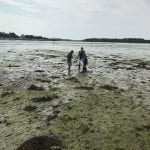 Chichester Harbour. Wide angle of beach weed and three researchers.