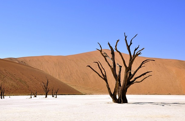 Desert landscape with tree