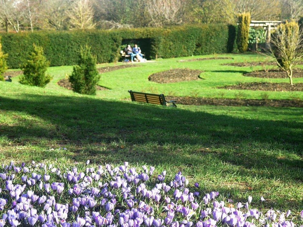 Flowers in Gildredge Park
