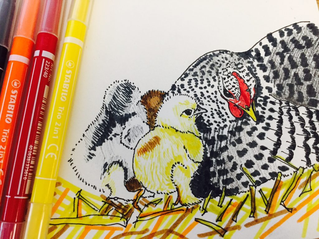 priscilla-and her chicks