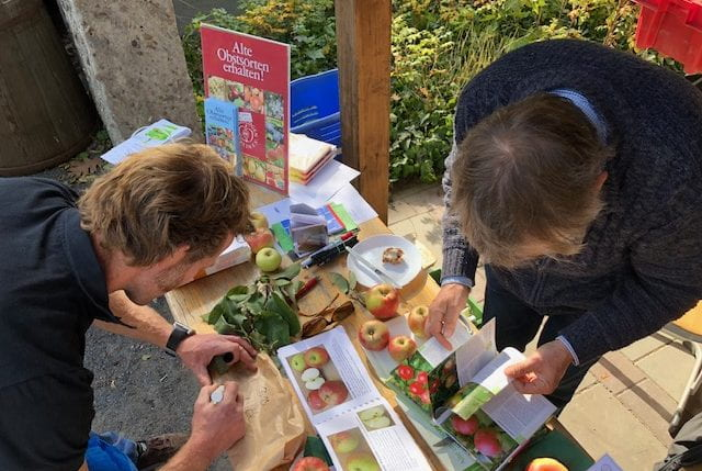 A pomologist at work during the Apple Fête 2018 identifying apple varieties that participants brought from their allotments and back gardens. (source: Michael Plögert 2018)