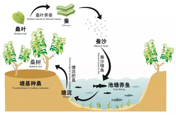 The Mulberry Dike Fish Pond System (source: Hengo's Blog www 2019)
