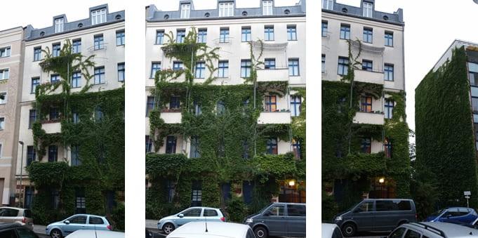 Image: Green facade of a residential Gründerzeit building in Berlin (source: Reinhard Groszmann 2019)