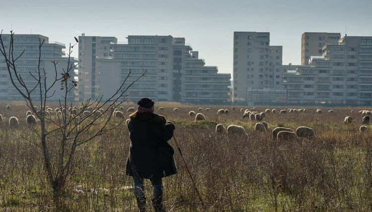 Roxana Triboi, one of our winners, shared details of her project on Urban Pastoralism. (source: Petrut Calinescu From the Series 'Living on the edge: Bucharest' 2017)