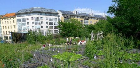 The first part of the Platform is dedicated to Berlin's community gardens. (source: Beatrice Walthall 2012)