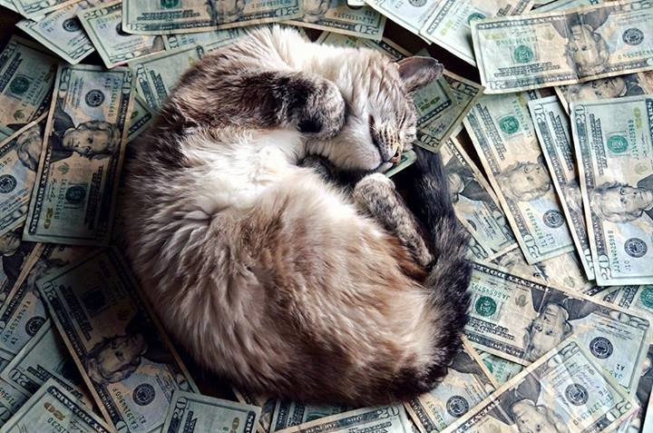 A cat rolling in a pile of paper money