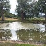 Ox Pond