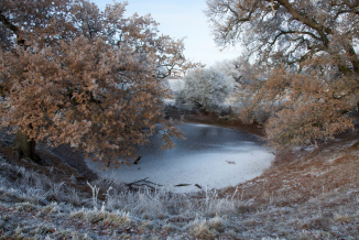 © Helen Sear, Pond, 2011