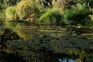 Image of Monet's garden