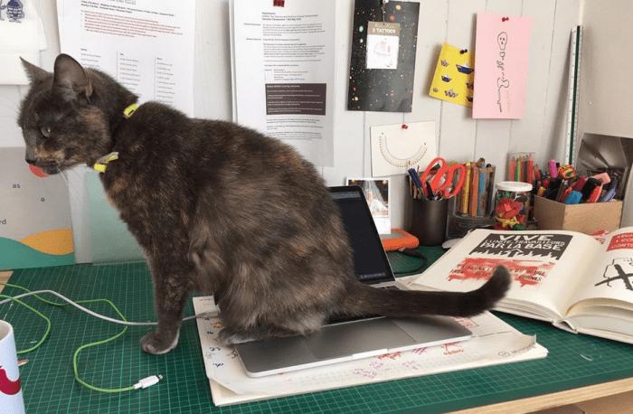 cat sitting on a desk