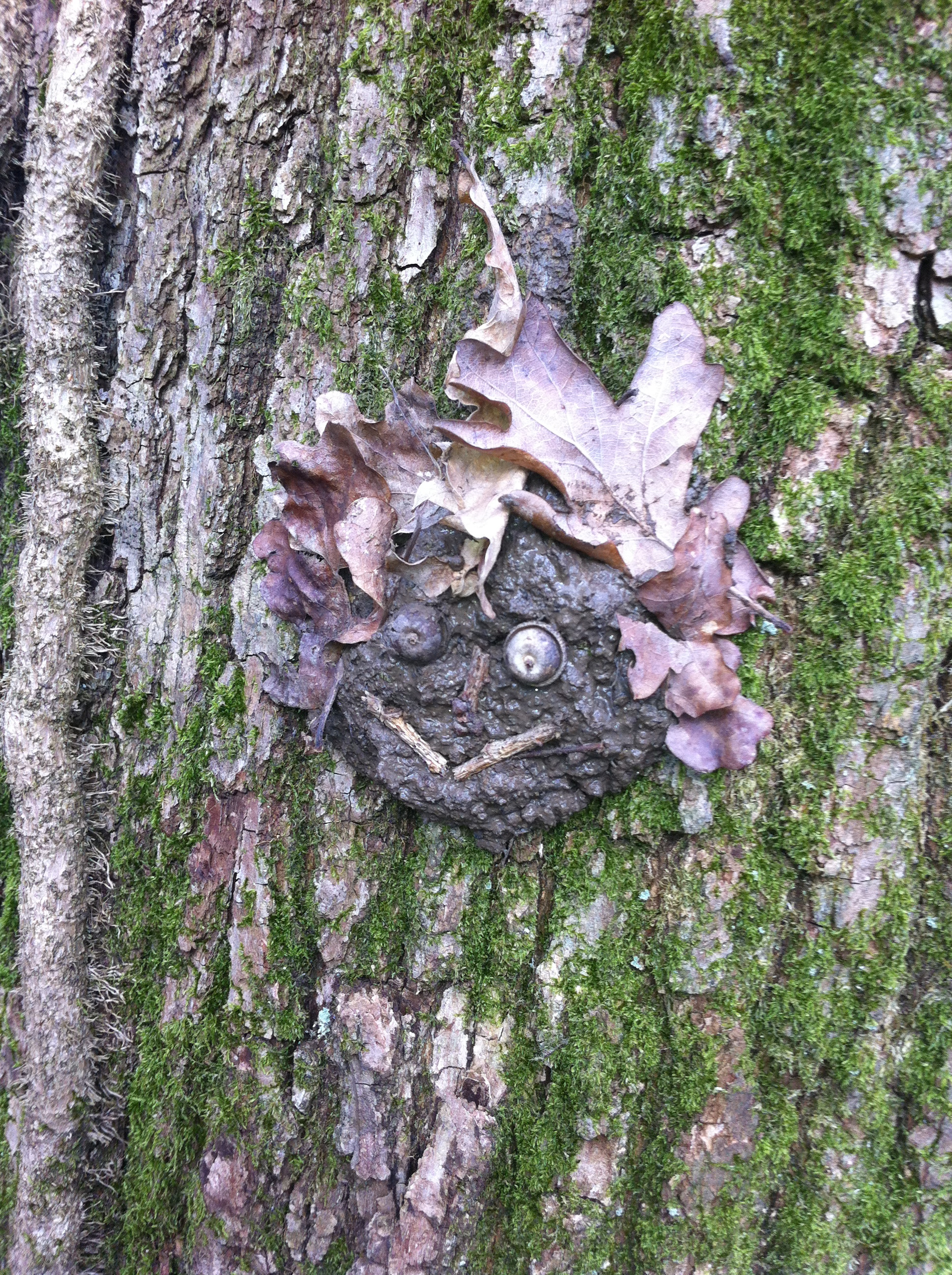 Forest-school smily face made from tree bark and leaves