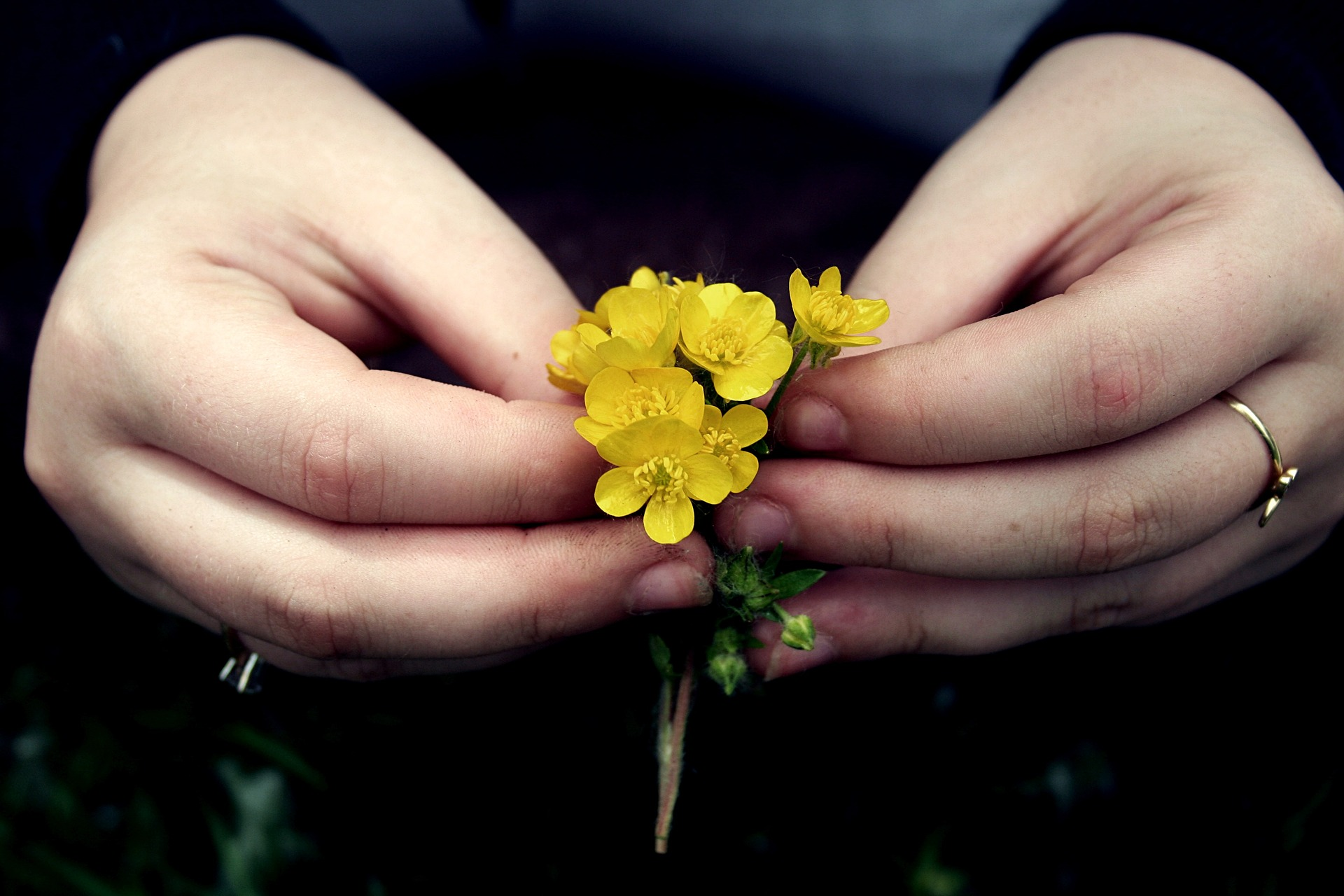 Hands yellow flower