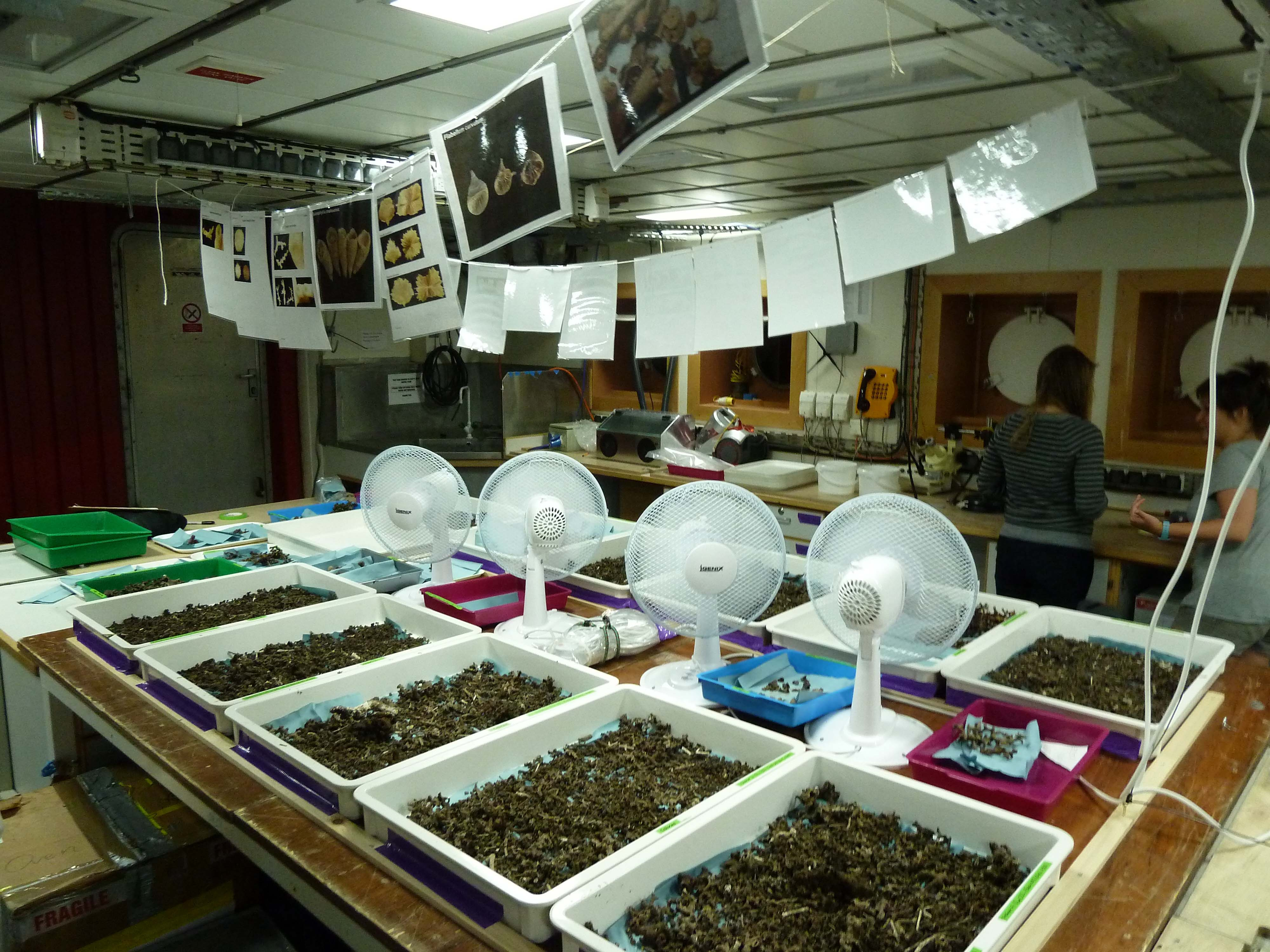 Laboratory Work Tracing Ocean Processes Using Corals And