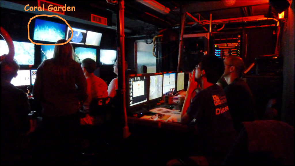 In the ROV controlling unit: Final ROV dive before saying goodbye to Carter seamount.  Photo by: Steph