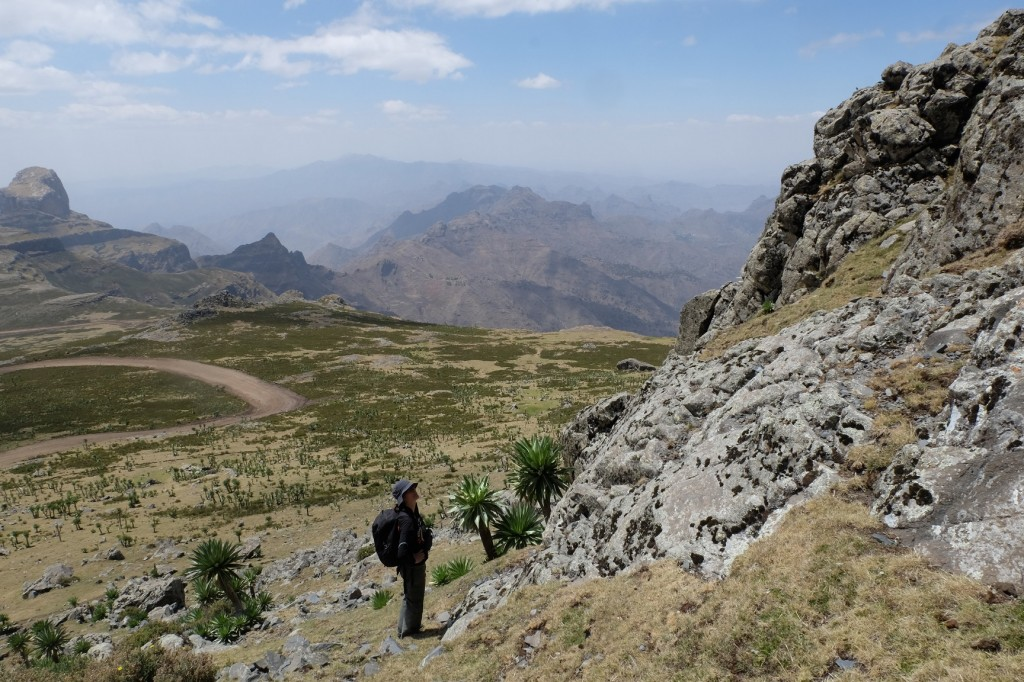 Dr. Razgour's research with bats has taken her across the Ethiopian Highlands, 4000m above sea level.