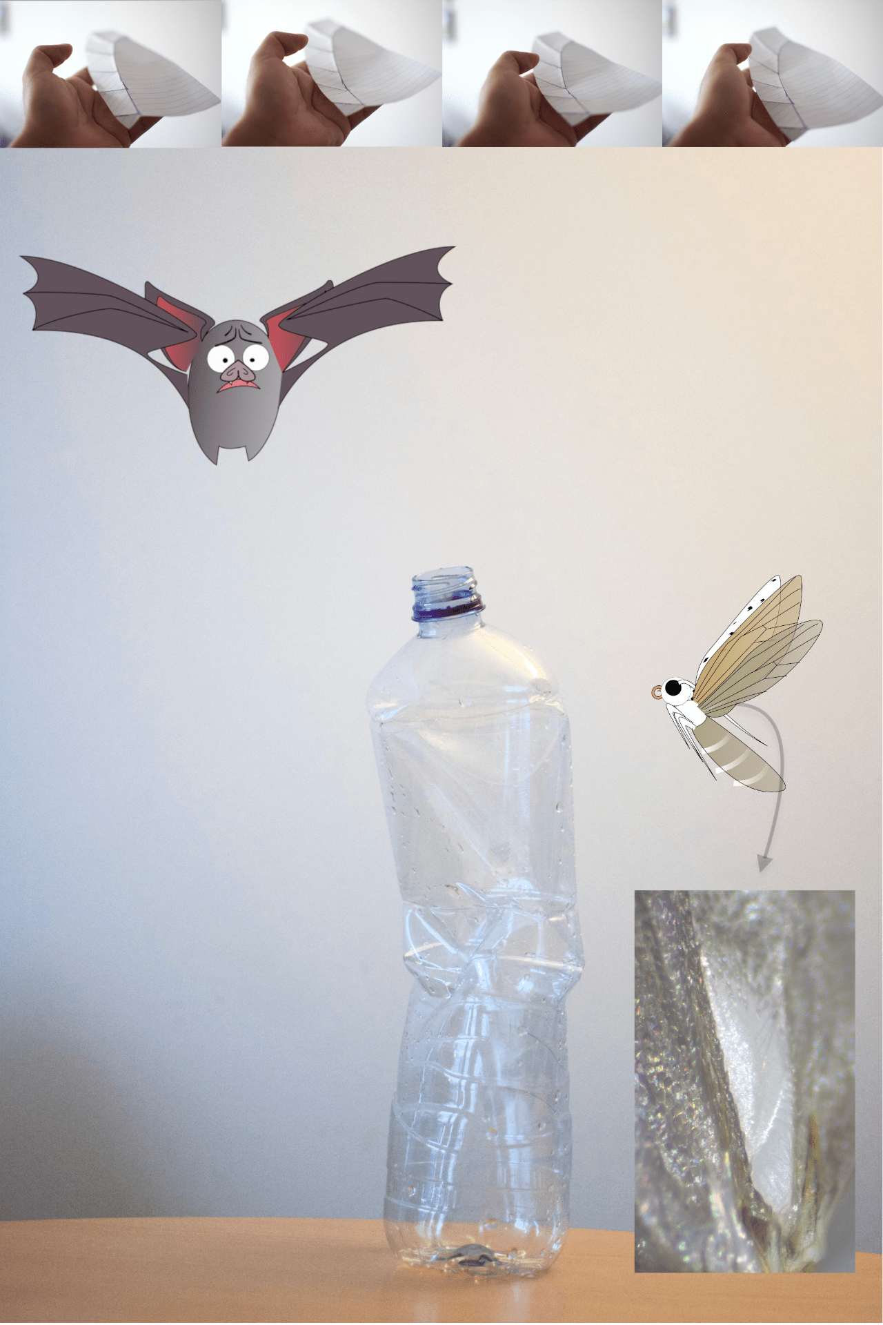 Four images of a hand holding a paper 'wing'. Beneath this set of images is a larger image: a cartoon bat hovering over a crushed plastic bottle. To the right of the bottle is a cartoon mosquito. An arrow next to the mosquito points down to a rectangular image of a reflective surface.