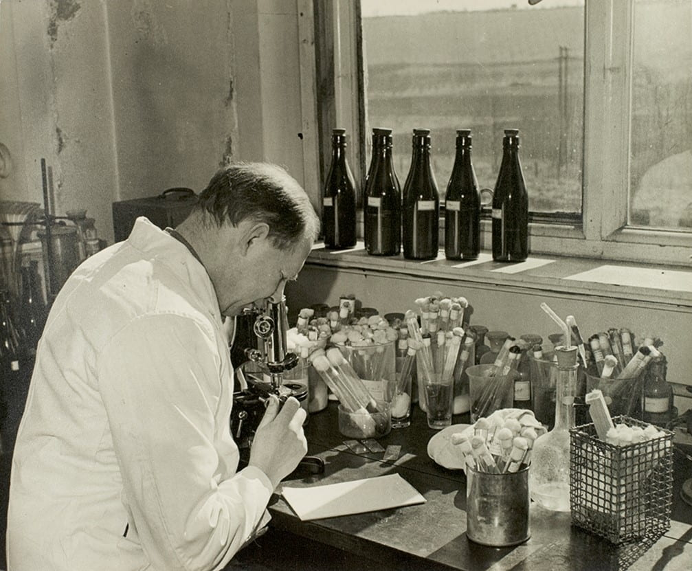 Investigating the yeasts and bacteria concerned in cider-making, shows man examining slides through a microscope.