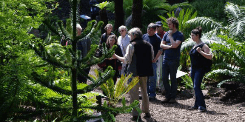 a group of visitors listening to the curator on a garden tour