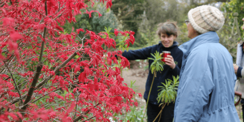 An image of a tree with red foliage; two people are standing next to it smiling, one is pointing at the tree.