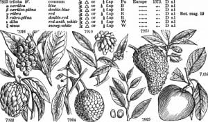 illustrations of plants with their Latin names