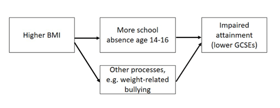 Diagram showing the pathways through which higher BMI could lead to lower GCSEs; either through more schools absence aged 14-16, or other processes such as weight-related bullying.
