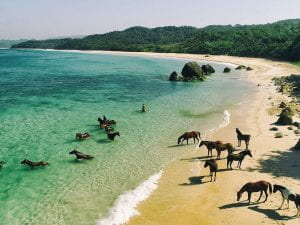 Photo of Suman beach with wild horses