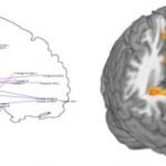 Exploratory analysis in phMRI